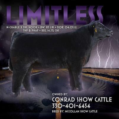 limitless Limitless Bull Sells Lot 1, Chi Sale on Sat. March 16th