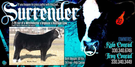 surrenderbanner Surrender Promotional Bull Sells Online April 19th
