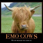 emocows 150x150 Funny Cow Photos