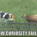 fail owned cow curiosity fail 150x150 Funny Cow Photos
