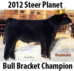 heatwavebullbracketchampion1 Steer Planet Bull Bracket Champions