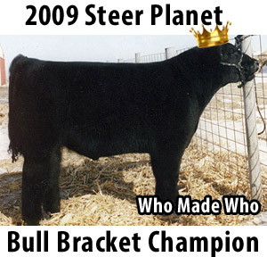 whomadewhobullchampion2 Steer Planet Bull Bracket Champions