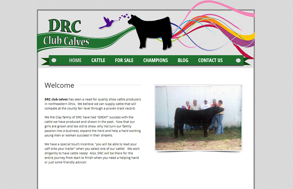 drcCapture Steer Planet Designed Website   DRC Club Calves
