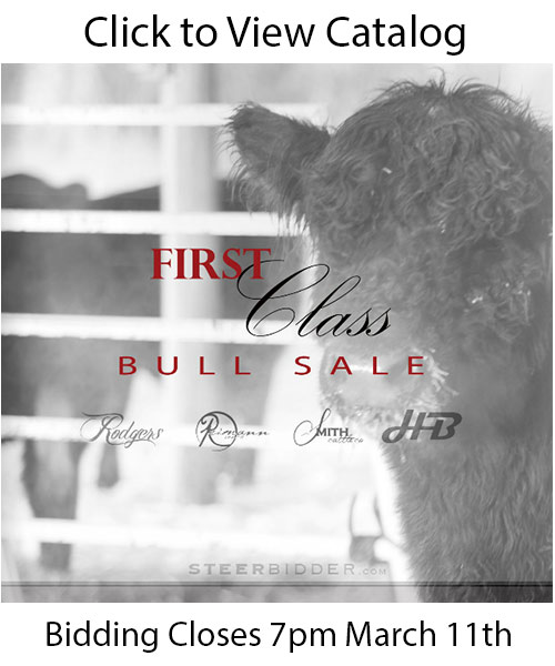 firstclassbullsale1 First Class Bull Sale on Steerbidder.com   Ends March 11th