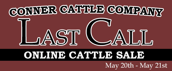 connerlg 1 Conner Cattle Co. Online Sale   May 20th to 21st on Steer Planet