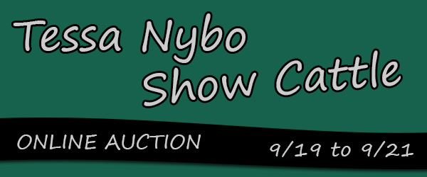 nybo banner Tessa Nybo Show Cattle Online Sale on Steer Planet